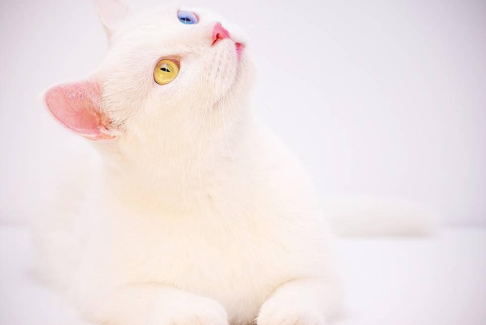 Как правильно помыть кошку в домашних условиях?