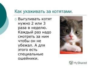 Котенок в доме: основные правила