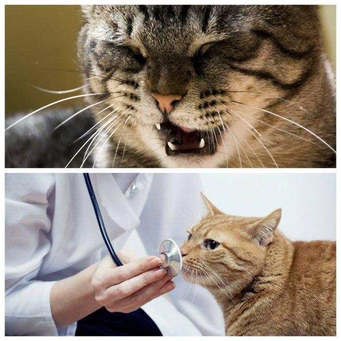 Анализ на токсоплазмоз у кошек цена