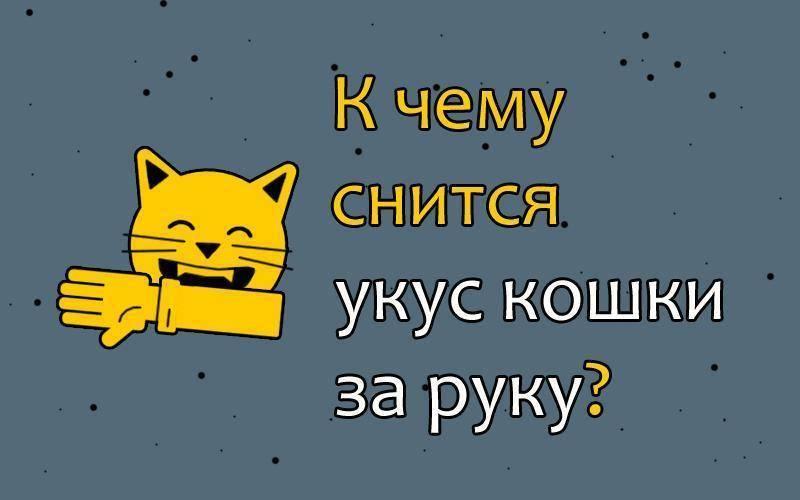 Кошка кусает во сне за руку или ногу, нападает и царапает: как толкуют сонники такие сновидения?