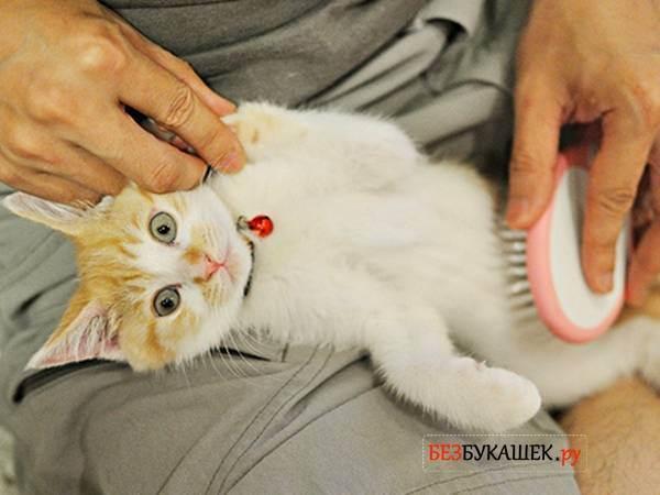 Пивные дрожжи кошкам: можно ли?