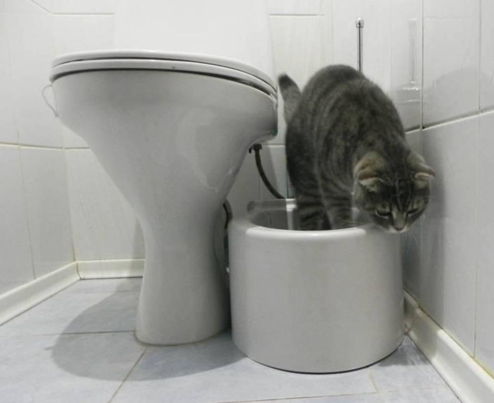 Как приучить кота к унитазу: какие породы кошек можно приучить к унитазу
