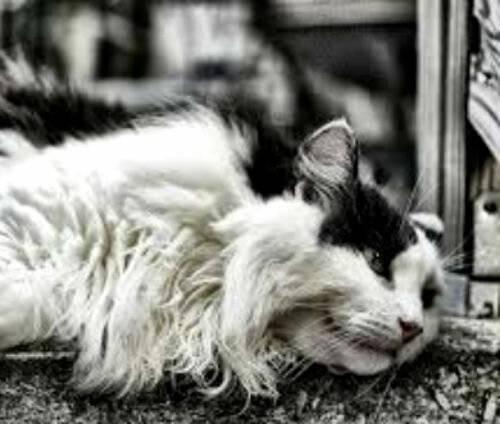 Приспособления для вычесывания кошек – расчески и щетки, перчатки и фурминаторы – и их применение в домашних условиях