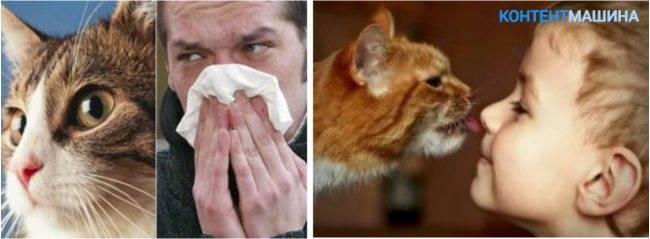 Как распознать аллергию на кошек у детей: признаки, симптомы и лечение