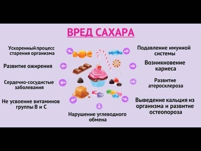 Сладости для кошек: можно ли сахар, шоколад и другие примеры вкусностей