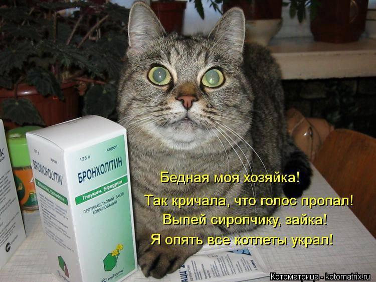 У кошки пропал голос - причины и что делать, варианты лечения в домашних условиях
