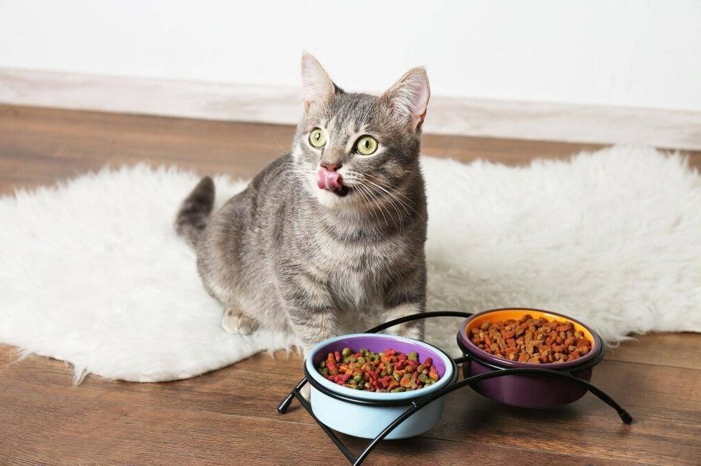 Как приучить кошку к домашней еде