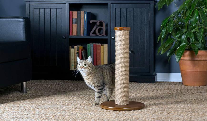 Как отучить кота или кошку драть обои и мебель — работающие способы