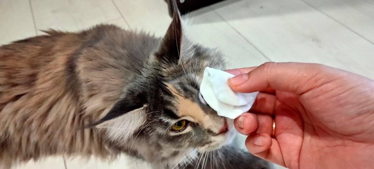 Конъюнктивит у кошек: как лечить воспалительный процесс в домашних условиях