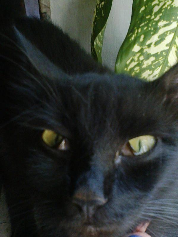 Болезни глаз у кошек: фото симптомов, диагностика и лечение (в том числе в домашних условиях), рекомендации ветеринаров