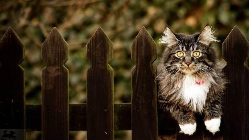 Панкреатит у кошек - симптомы, причины развития и лечение