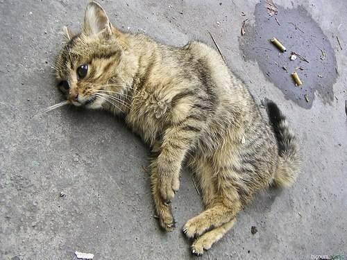 Кот умер дома от старости или болезни: что делать, как его правильно похоронить?