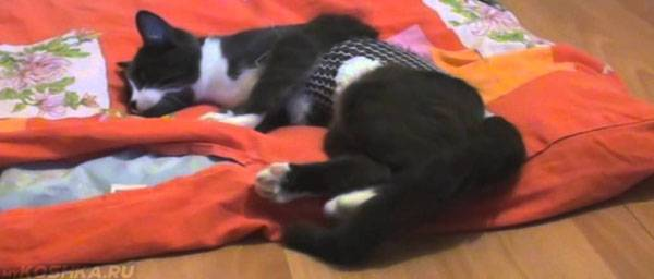Вялость и поведение кошки после стерилизации: все время спит, мяукает и тошнит - норма ли это?