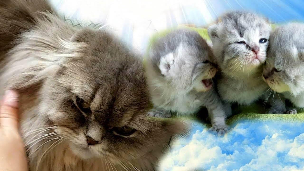 Кошка отказалась от котят - что делать, чем кормить