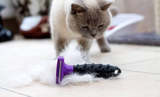 Фурминатор для кошек – благо для хозяина и питомца