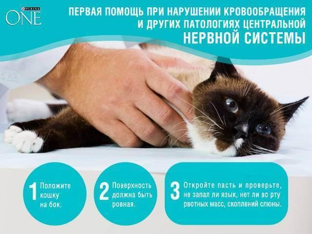 Почему кот стал мало есть?