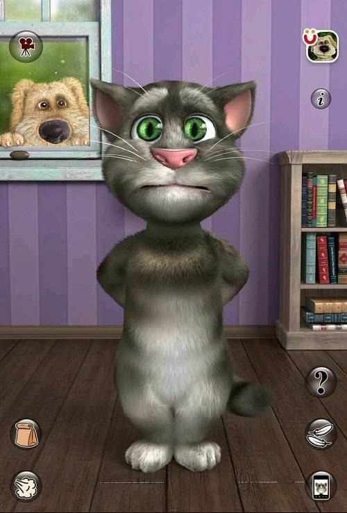 Специальные игры для котов на планшете