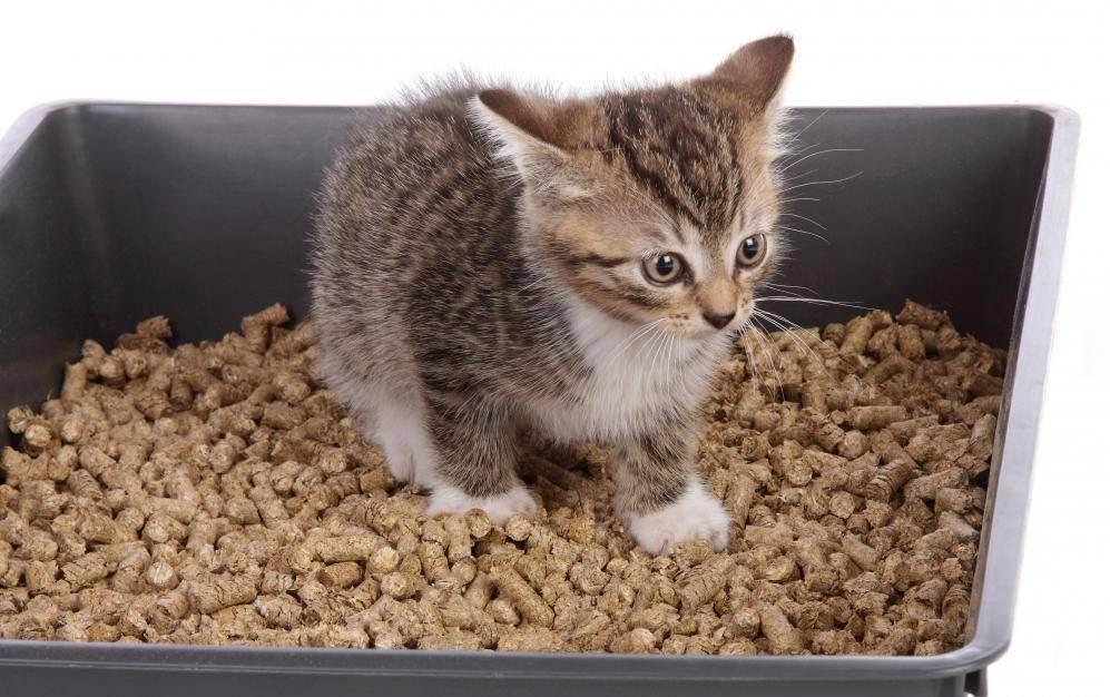 Выбираем наполнитель для кошачьего лотка
