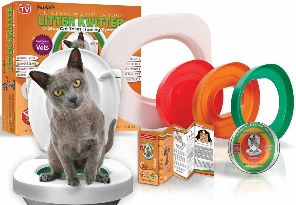 Как приучить кота к унитазу - пошаговая инструкция как приучить кота к унитазу - пошаговая инструкция