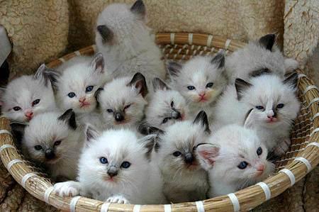 Что нужно подготовить к появлению котенка. что нужно подготовить к приезду котенка. что должно быть готово к приезду вашего куненка