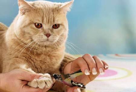 Гигиена собак и кошек - статьи о ветеринарии «свой доктор»