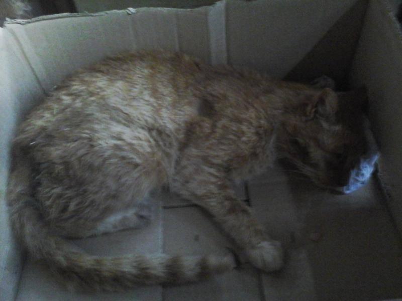 Что означает, если кошка умерла дома