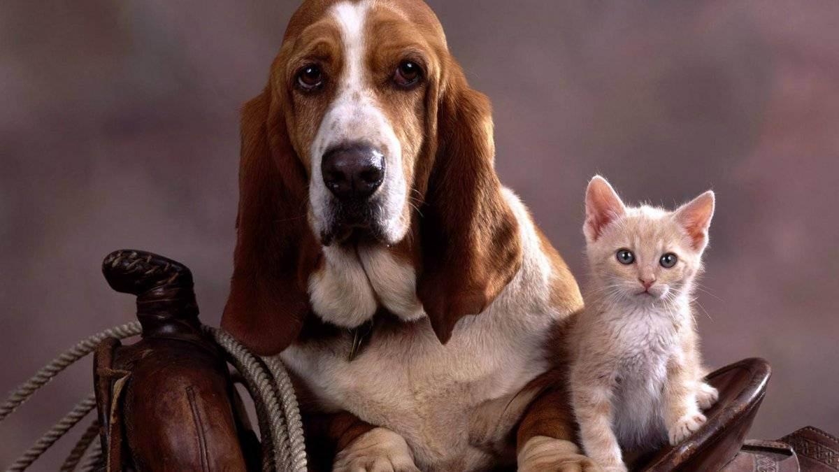 Почистить уши котенку в домашних. как чистить уши котенку и взрослой кошке в домашних условиях
