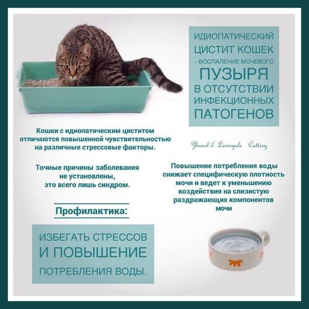 Лечение идиопатического цистит у кошек