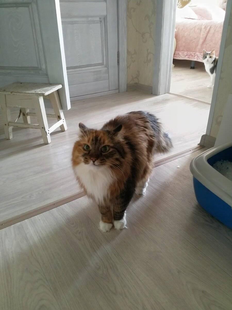 Kak-shipit-koshka - запись пользователя виктория (дизайнер) (id2224057) в сообществе домашние животные в категории помогите советом - babyblog.ru
