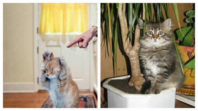 Что делать, если кошка (кот) гадит в неположенном месте: как выяснить причину и отучить питомца?