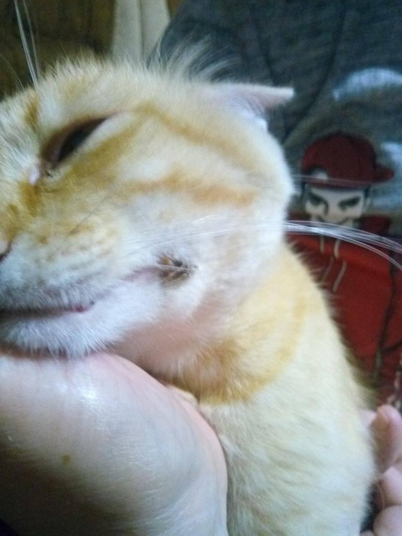 Воспаление лимфоузлов у кошки: первые признаки, формы заболевания, первая помощь, лечение, препараты, меры профилактики,