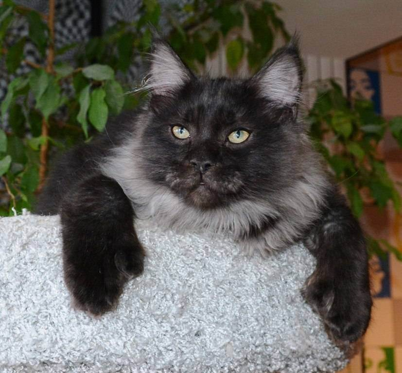 Мальт-паста для кошек: инструкция по применению, состав, побочные действия