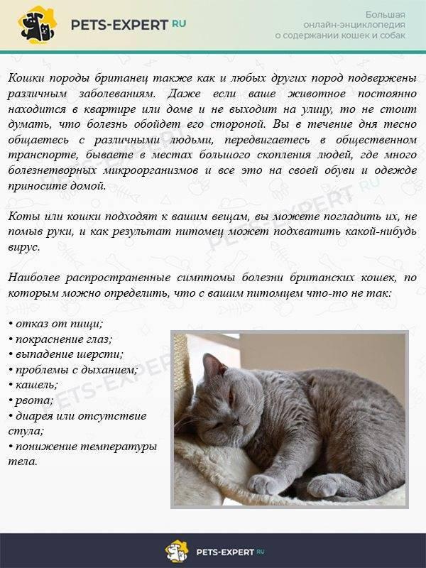 У кота раздулся живот: причины вздутия и лечение