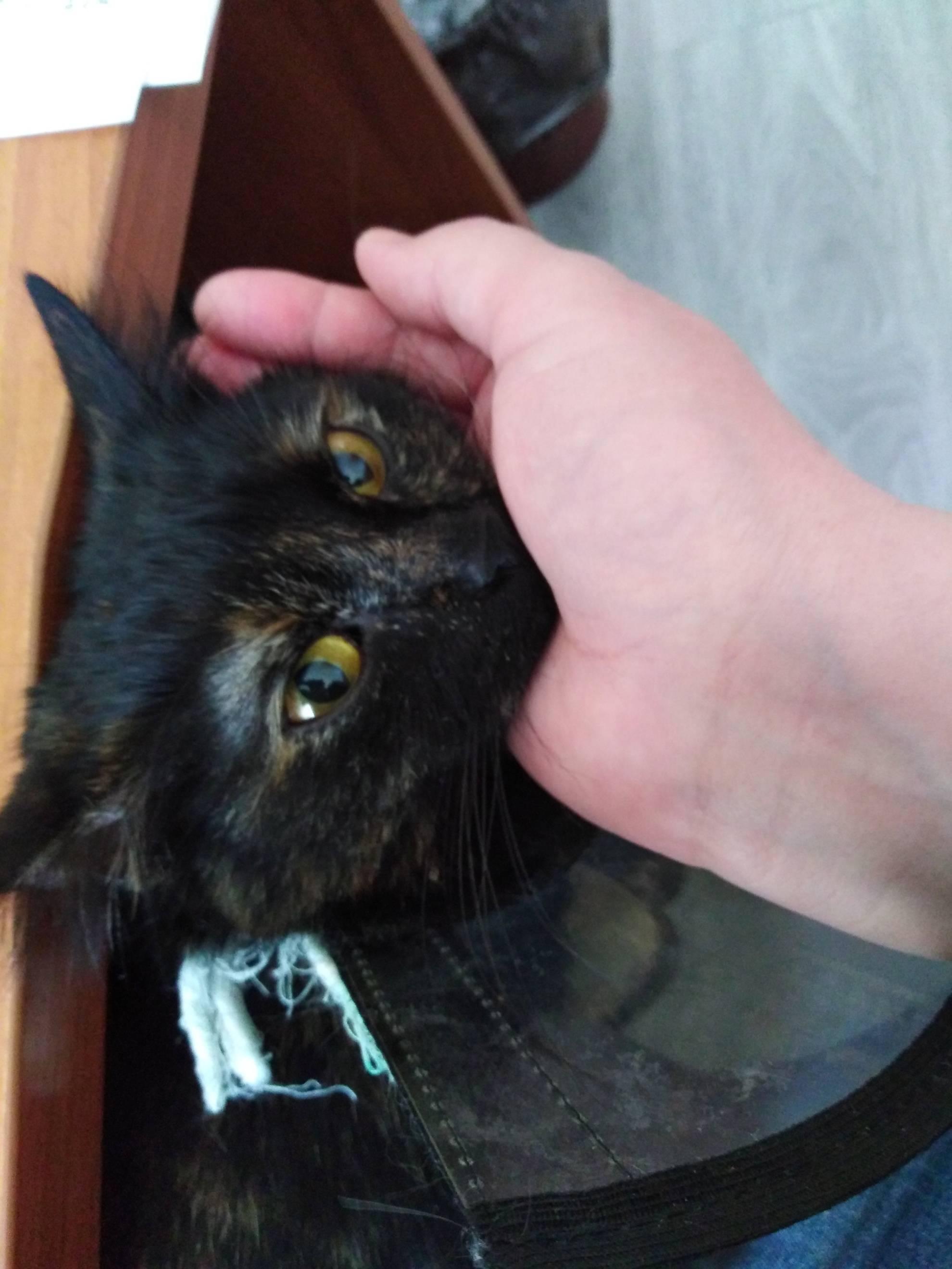Могут ли холодные уши у кошки быть симптомом заболевания?