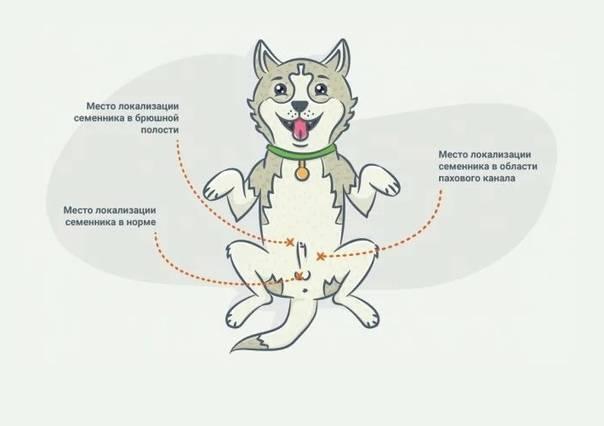Когда стерилизовать кошку: лучший возраст по мнению ветеринаров, особенности операции в раннем, среднем и пожилом возрасте, можно ли стерилизовать кошку во время течки, беременности или после родов