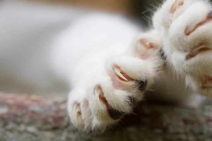 Операция мягкие лапки и последствия удаления когтей у кошек