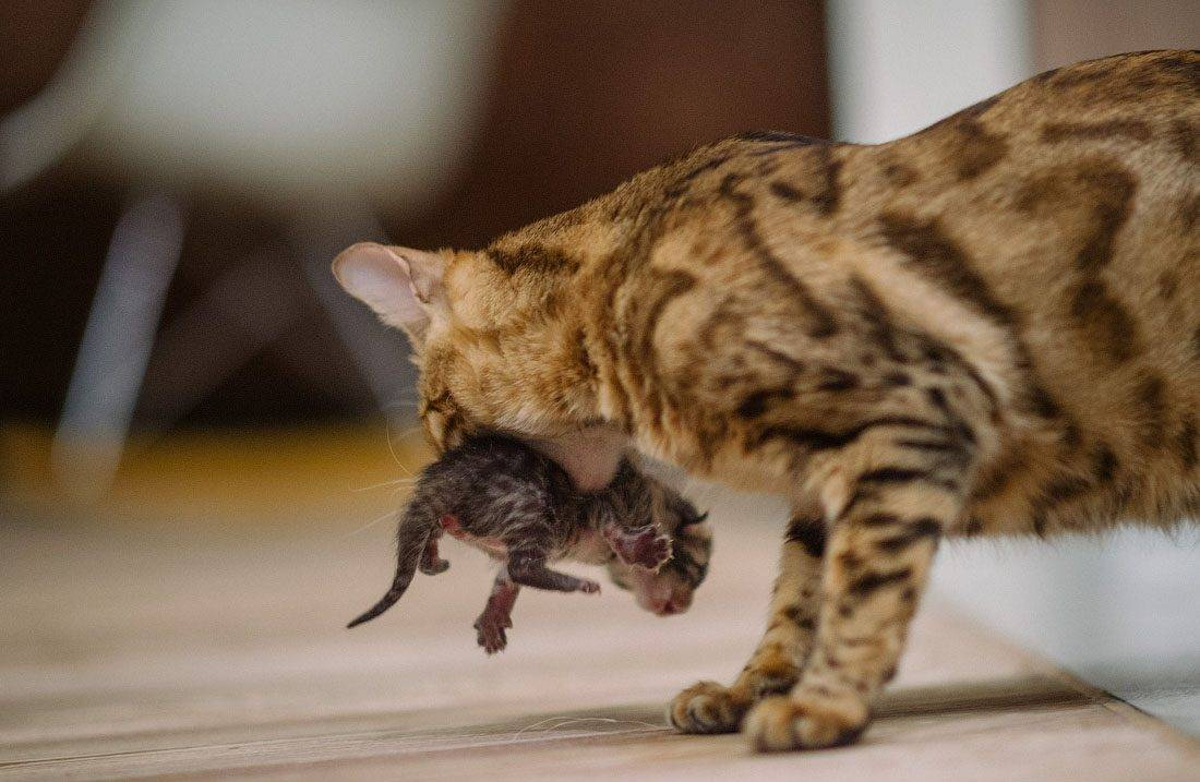 Кошка прячется в темные места: основные причины кошка прячется в темные места: основные причины