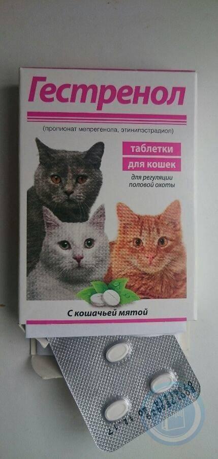 Противозачаточные средства для кошек или современная контрацепция