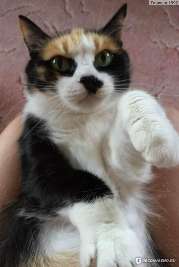 Зубы у кошек: болезни, профилактика и уход