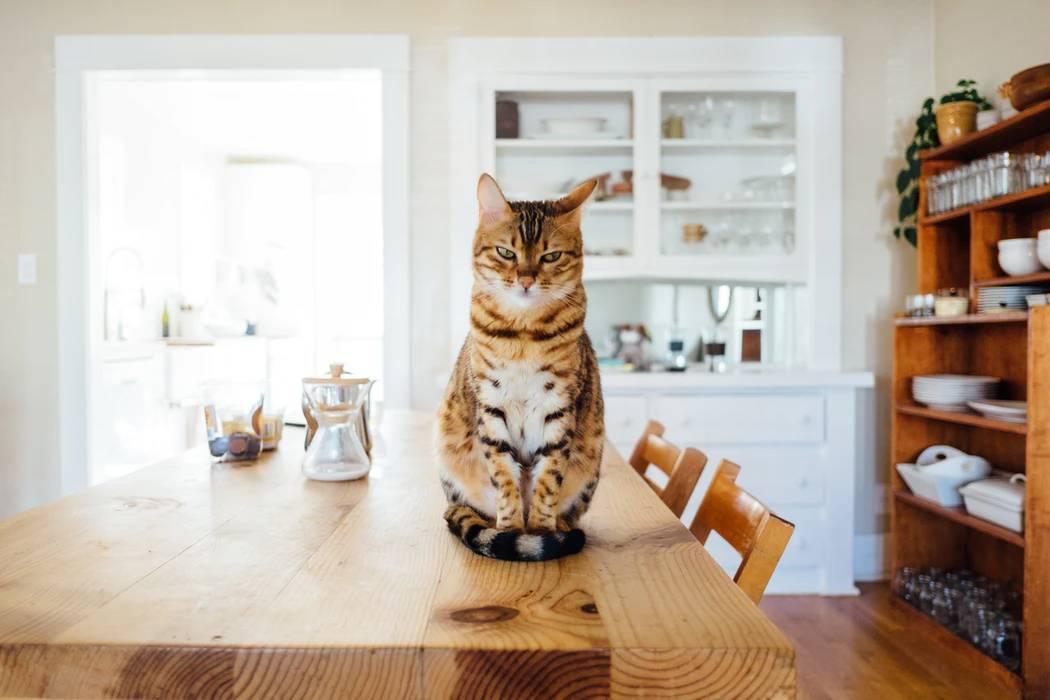 5 проверенных способов отучить кошку лазить по столу