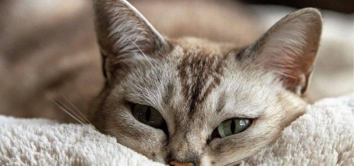 Почему у котенка или взрослой кошки может быть понос с примесью крови, слизи и рвота белой пеной или желчью, что делать?