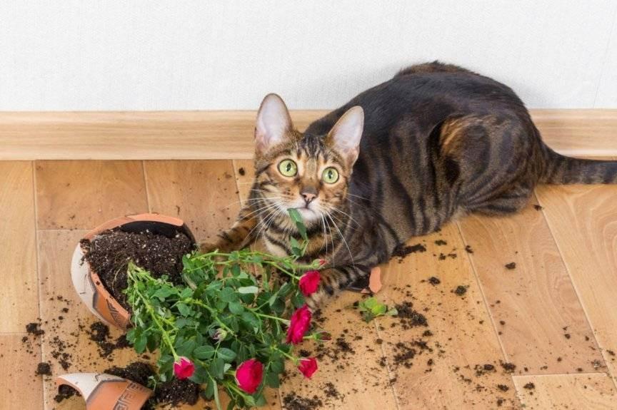 Почему кот ест землю на улице или из цветочного горшка, лижет песок, что делать?