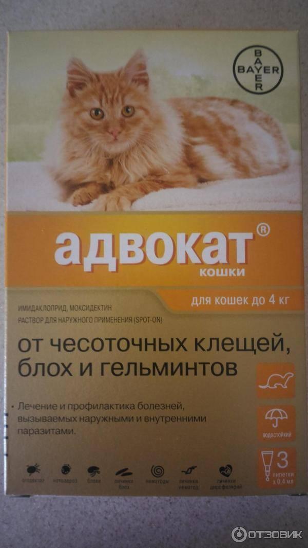 Таблетки от глистов для кошек – описание препаратов