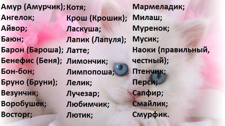 Как назвать белого котенка мальчика: популярные клички