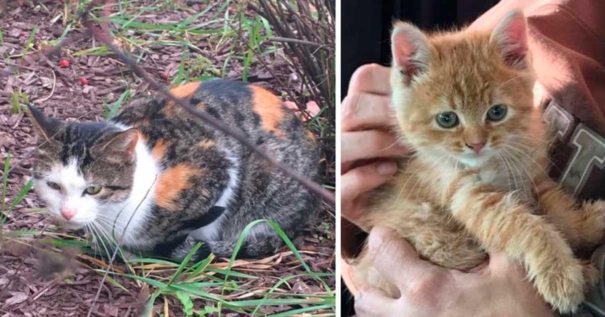 Как поймать кота: на улице, во дворе, поимка дома