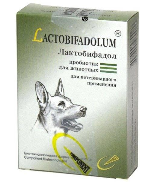 Байтрил для животных: показания и противопоказания, инструкция по применению лекарства с дозировками