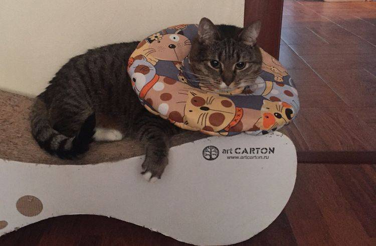 Попона для кошки после стерилизации: как сделать из подручных материалов