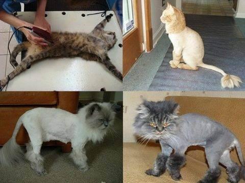 Нужно ли стричь кошек?