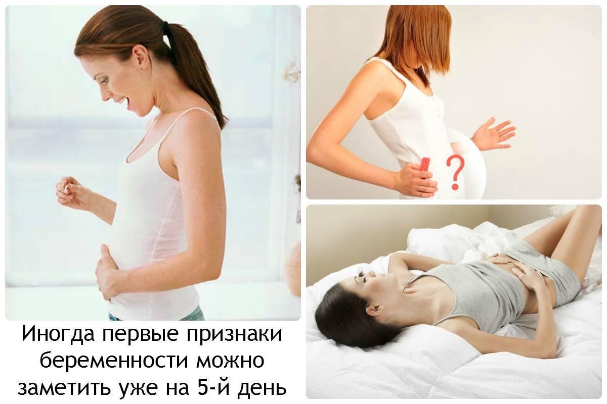 Как понять что кошка беременна: признаки