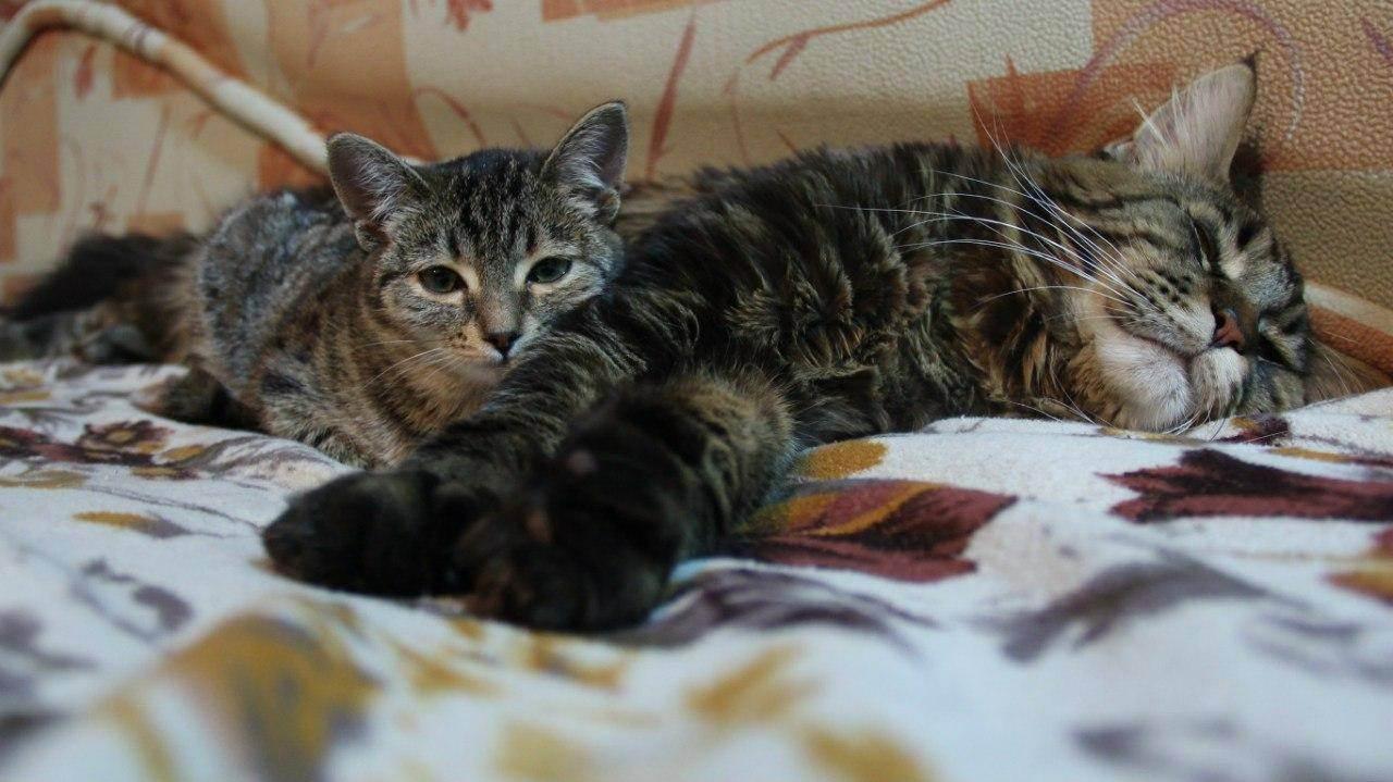 Кошка в квартире или частном доме: где лучше жить домашним животным?